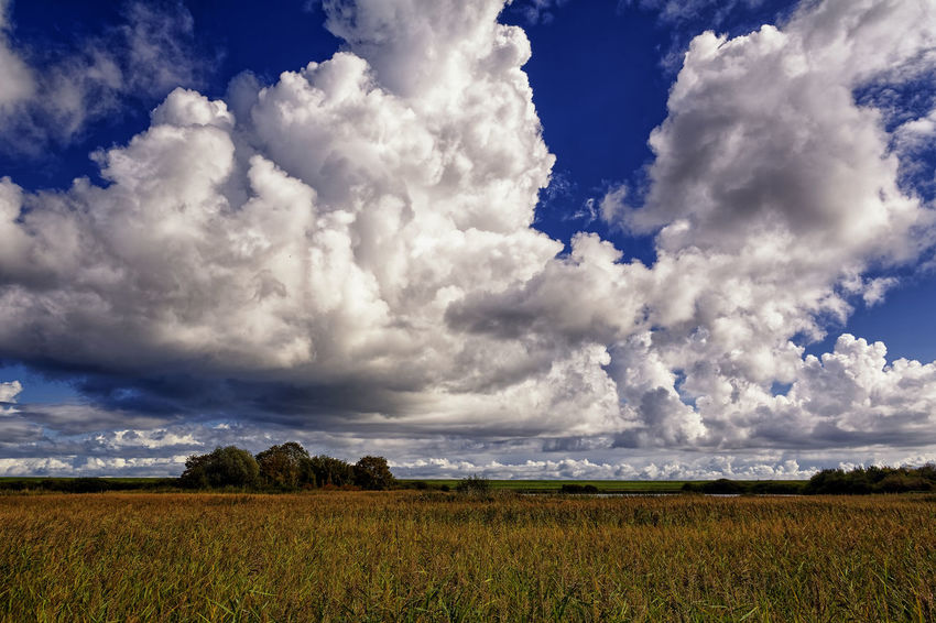 Over The Reed Agriculture Beauty In Nature Cloud - Sky Day Field Growth Landscape Nature No People Outdoors Rural Scene Scenics Sky Tranquil Scene Tranquility