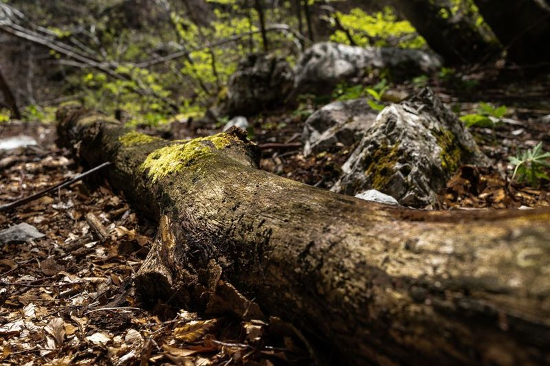 Tree Plant Wood