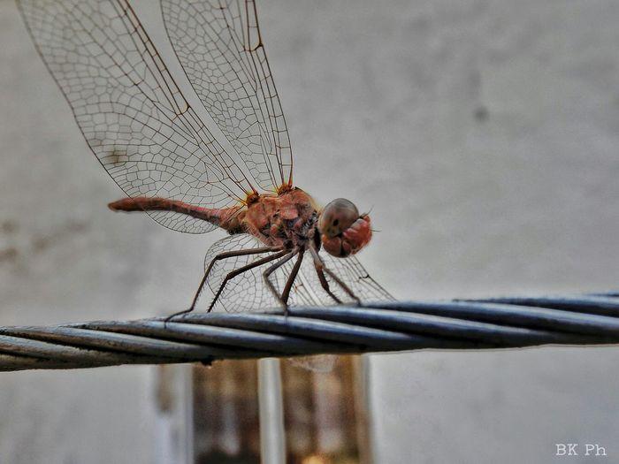 Eyeem Hungary Macro Fujifilm Finepix S4800 Super Macro Insect Macro Beauty