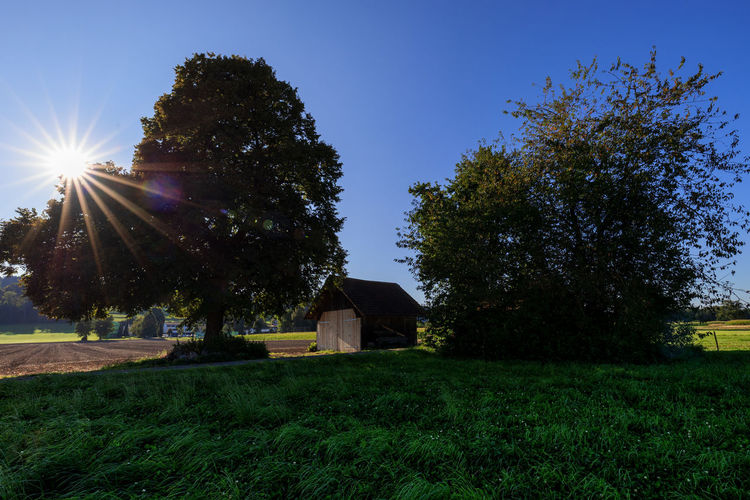 Trees and houses on field against clear sky