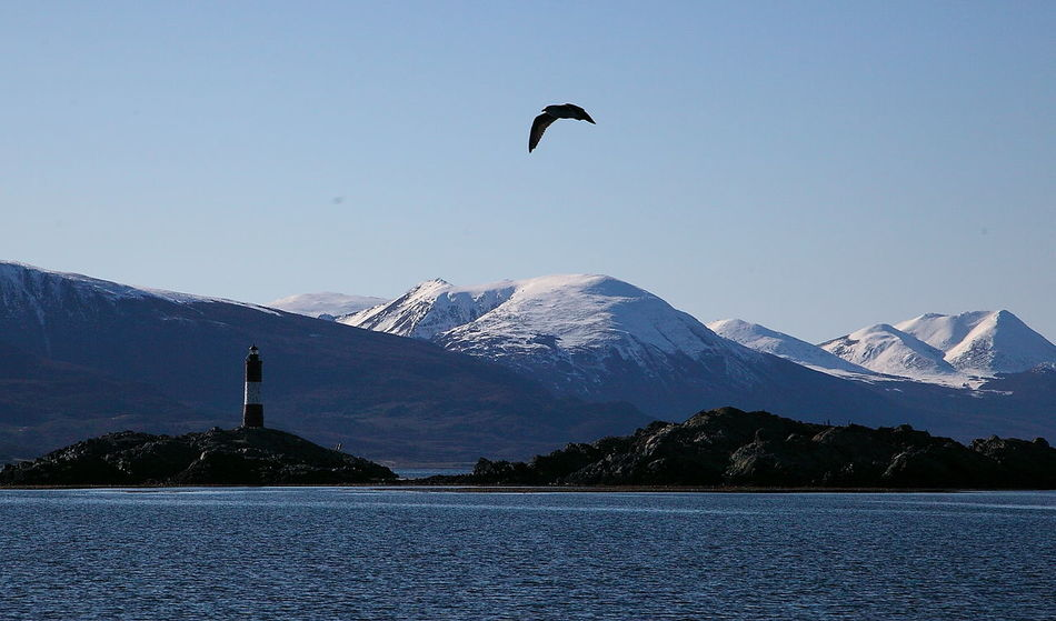 Beauty In Nature Bird Blue Clear Sky Faro Del Fin Del Mund Flying Mountain Nature Outdoors Snow Surf Tranquil Scene Tranquility Travel Destinations Ushuaia Arg. Water Winter