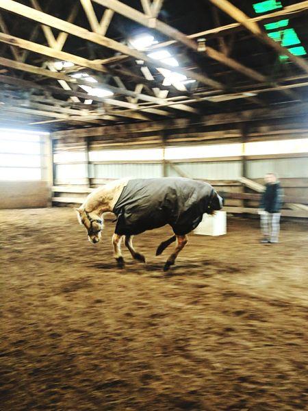 horse Livestock Indoors  Mammal Full Length Domestic Animals One Animal Animal Themes