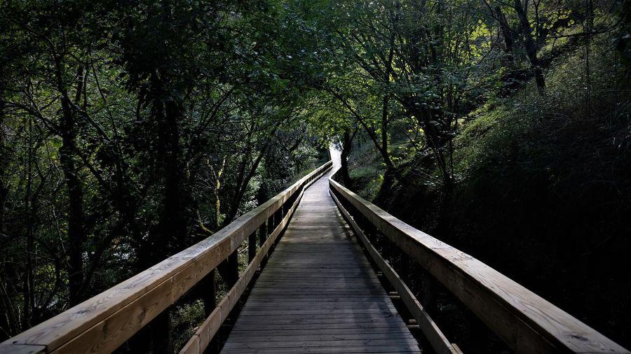 View of long wood footbridge in forest