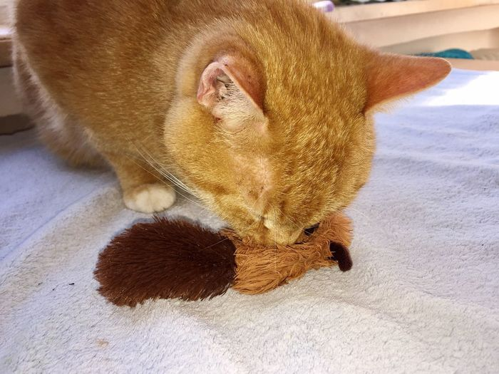 cat toy with