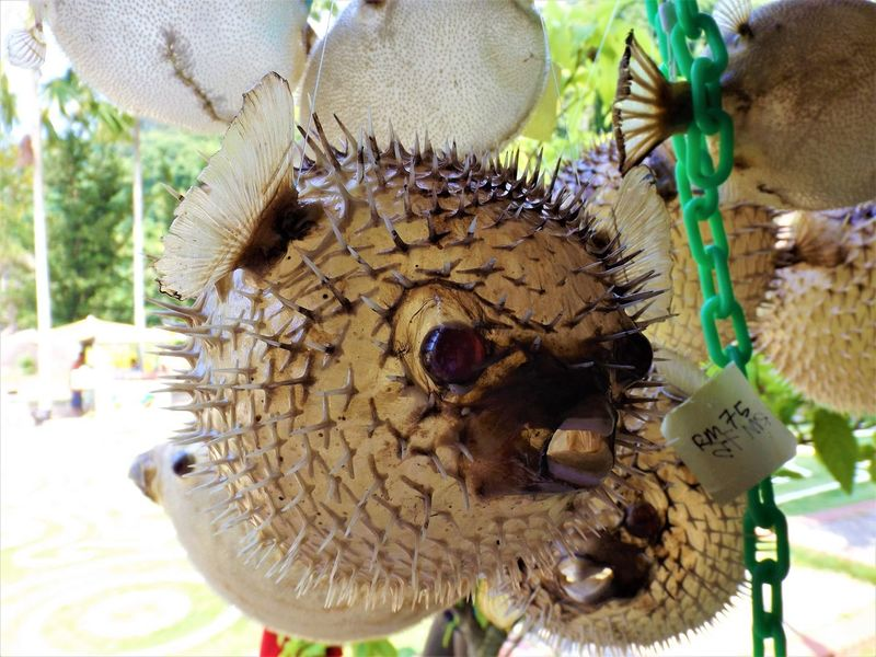Dried Fish Animal Themes Animals In The Wild Cultures Dried Fish Nature Outdoors Workmanship