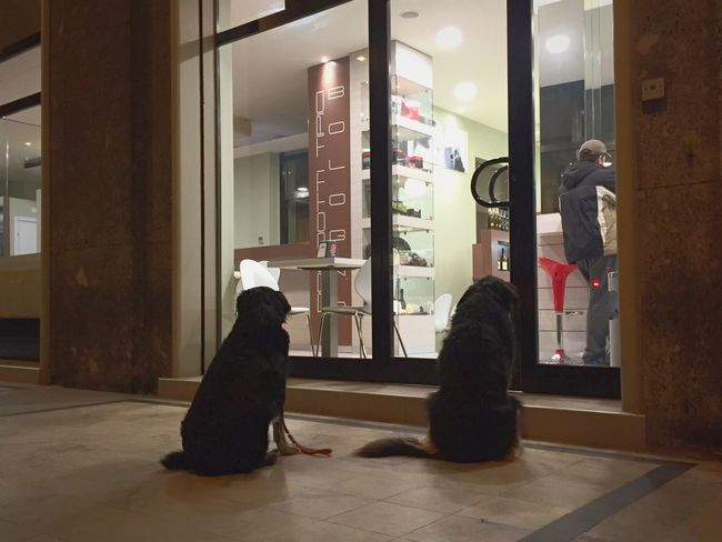 Waiting for my man Light And Shadow Showcase: January Urban Lifestyle Dog Love Walking Around Check This Out Night Lights Streetphotography Eye4photography  EyeEm Best Shots