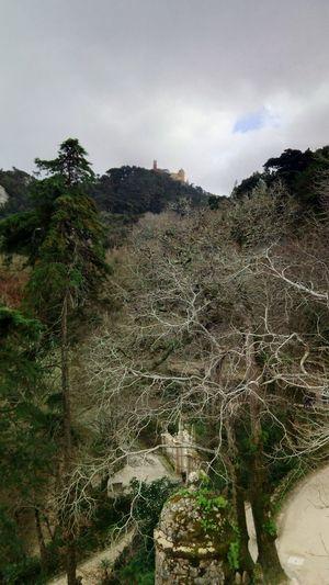Palácio da Pena on top. Palace Trees Wildlife Wildlife & Nature Nature Travel Beauty In Nature Cloud - Sky Day Mountain Sky Built Structure History Architecture