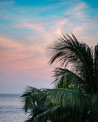 Palm Leaves with Sky and Ocean at Sunset Beauty In Nature Cloud - Sky Growth Horizon Over Water Leaf Nature No People Outdoors Palm Leaf Palm Tree Plant Scenics - Nature Sea Sky Sunset Tranquil Scene Tranquility Tree Tropical Climate Water