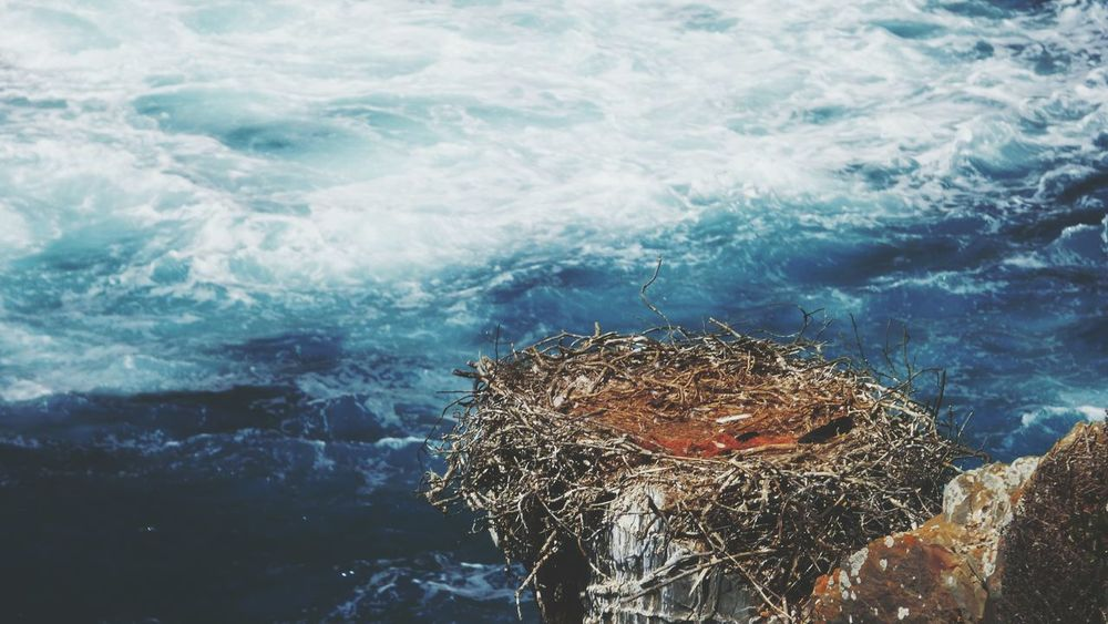 EyeEm Selects Sea Water Nature Day Close-up Outdoors Nesting Birds Nest In Rocks Animal Themes Portugal Bird Nest Near Sea Bird Nests No People Your Ticket To Europe Investing In Quality Of Life The Week On EyeEm