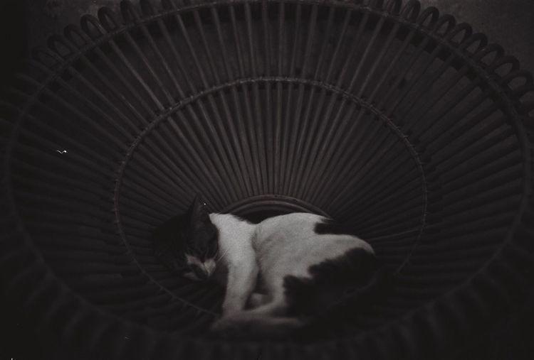 Sleep tight Blackandwhite 35mm Film Photography Ilford Nikonf2 Dyutano