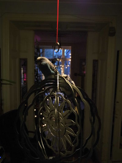 Metal Hanging Zoology Animals Light And Shadow Glowing Home Sweet Home Indoors  Birds Parakeet Budgies Ideas