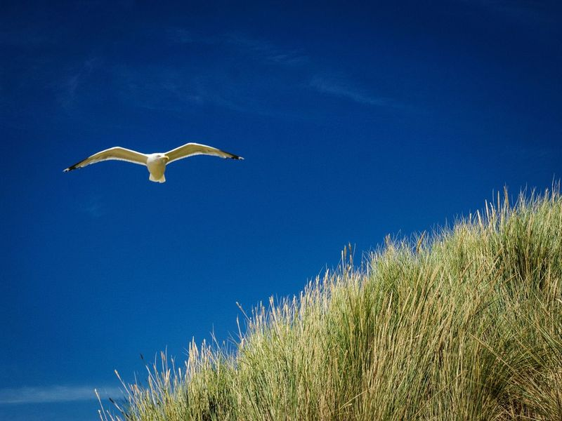 Posing Freedom Seagull Nature Genießen Blue Sky Beauty In Nature You And Me Seite An Seite Travel Bird Of Prey Bird Flying Blue Clear Sky Sky Scenics Tranquil Scene Tranquility Idyllic Calm