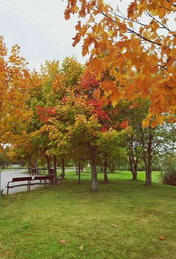 Autumn Colors Autumn Leaves Red Yellow Green Growth Nature Outdoors Tranquility Colourful Calm No People Tree Leafs Photography Växjö  Sweden