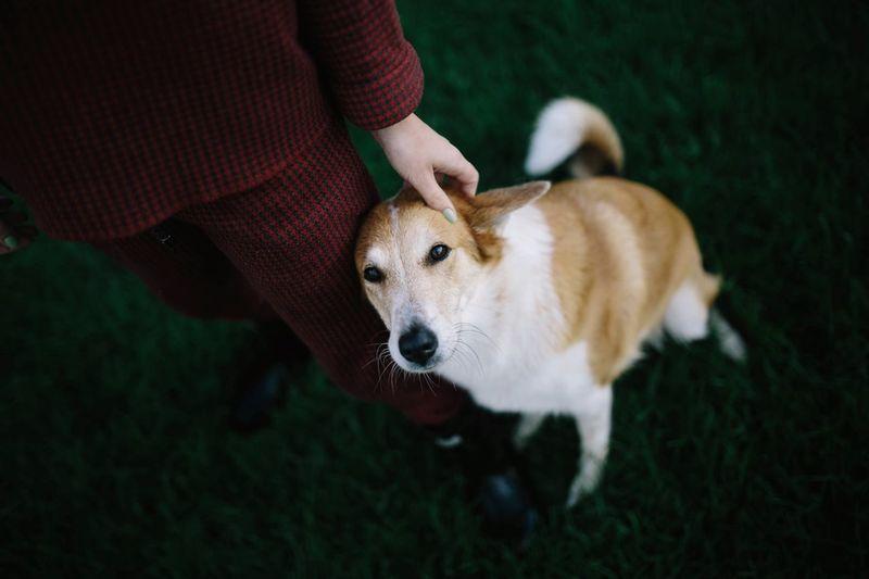 High angle view of dog standing on hand