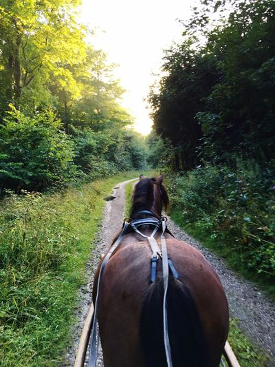 Rear view of horse on road amidst field