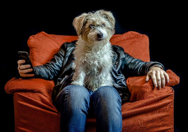 Dog Pets Sitting Humor Sofa Portrait Black Background One Person People Indoors  Cute