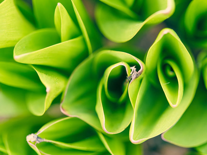 Beauty In Nature Close-up Flowers Garden Growth Leaves Lily Lily Of Valley Plant Point Of View Spring