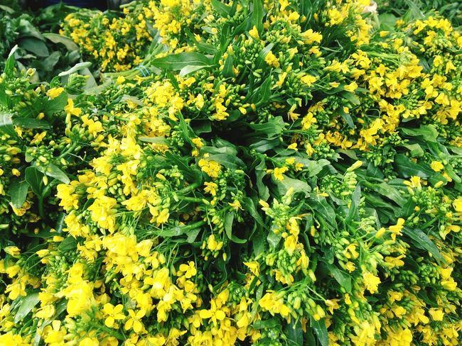 Tiny yellow broccoli blossoms. Farmers Market Broccoli Blossoms  Yellow Flowers Vegetables Farmstand Healthy Eating Flowers Harvest Delicious Health Food Healthy Healthy Lifestyle Green And Yellow  Springtime