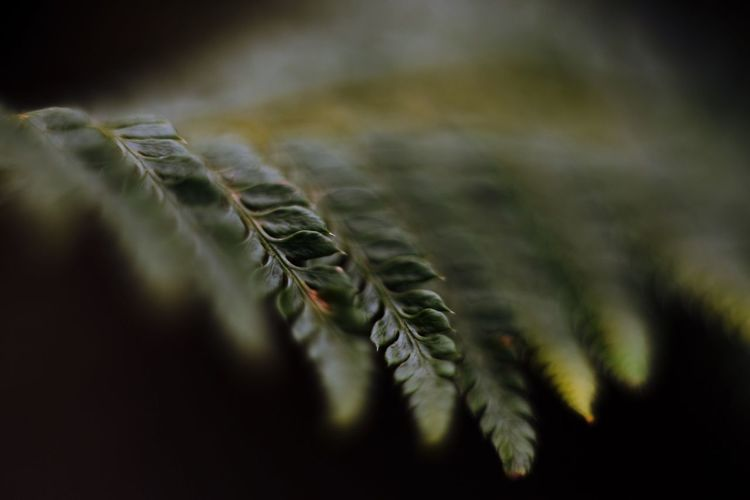 Plant Bokeh Depth Of Field Green Abstract Fern Nature EyeEm Selects