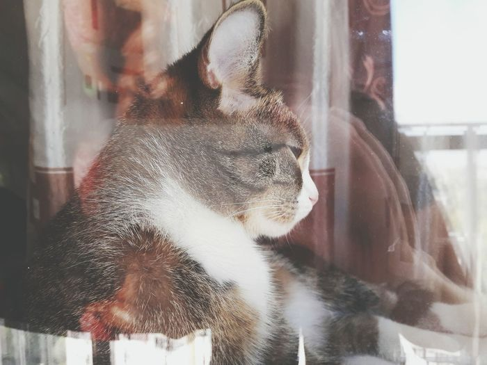 Cat Through The Glass Cats Of EyeEm Cat Photography