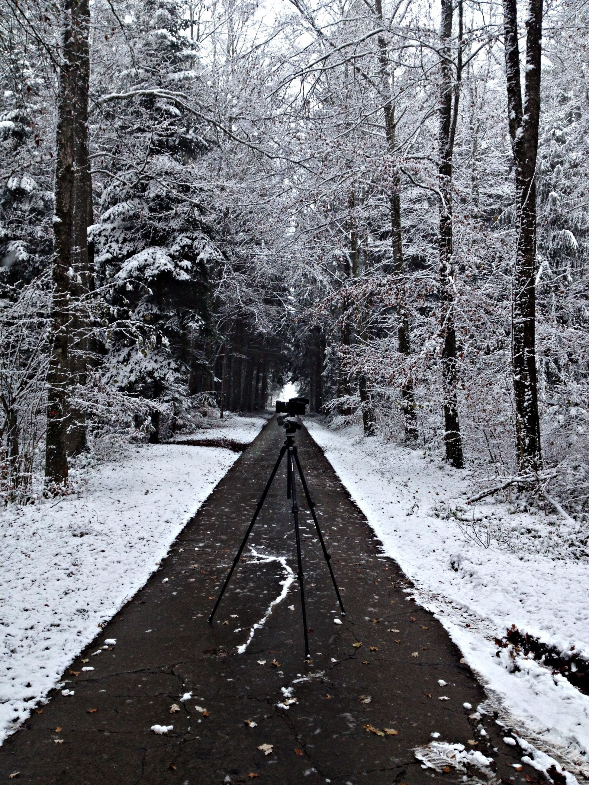 the way forward, snow, cold temperature, winter, diminishing perspective, vanishing point, season, road, weather, tree, transportation, nature, covering, tranquility, empty road, tranquil scene, white color, long, bare tree, covered