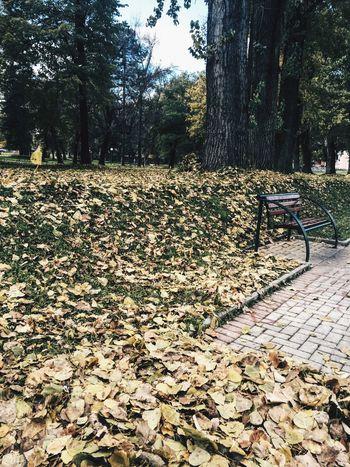 Autumn Autmn Colors Gostivar Macedonia Relaxing Vardar IPhoneography VSCO Vscocam Greens Hb2 Tree Showcase: November