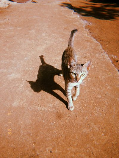 Mobilephotography PhonePhotography Smart Phone Nature Mammal Feline Cat One Animal Pets Domestic Animals Domestic Cat Domestic Vertebrate Looking At Camera Shadow People High Angle View Portrait Day Full Length Whisker