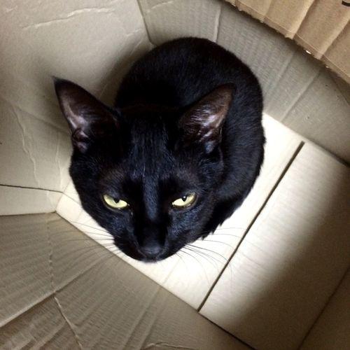 Cat In Box EyeEm IPhone