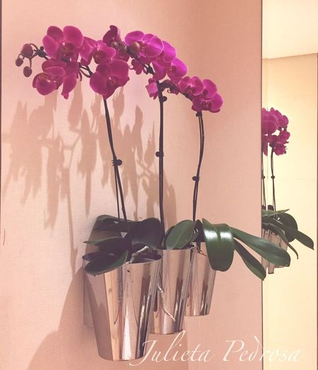 Flower Indoors  Freshness Vase Fragility Arrangement Pink Color Decoration Beauty Petal Beauty In Nature Blossom
