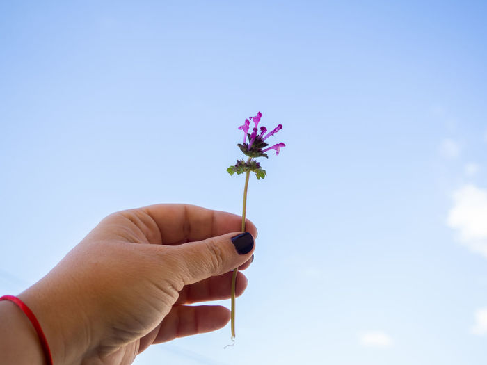 Cropped hand holding purple flowering plant against sky