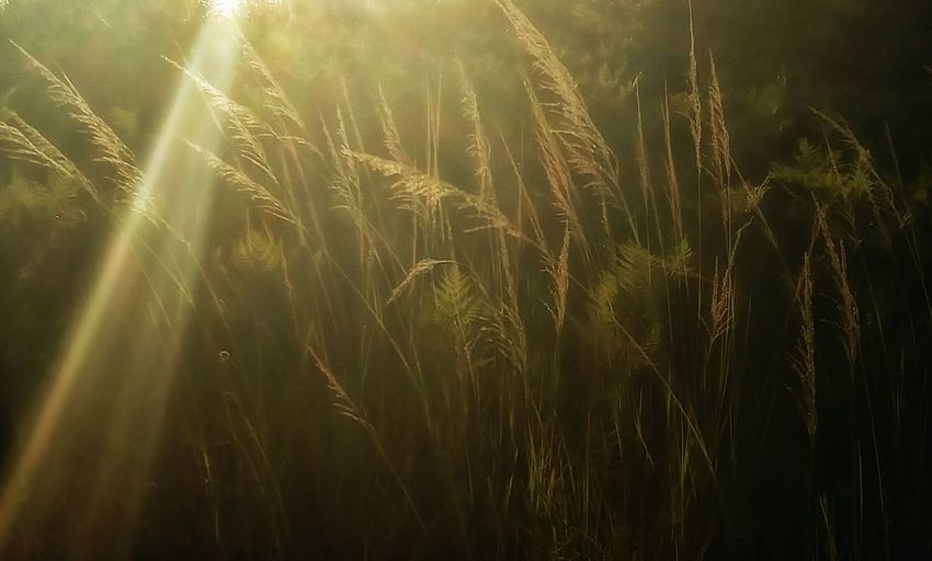 Art By Nature Last Rays Of Sunlight Beauty In Nature Nature's Diversities Art And Nature Tranquility Relaxing Golden Hour Light And Shadow Goldenhourphotography Breezeintoaction Breeze On Bushes Sunrays And Breeze Angle And Perspective