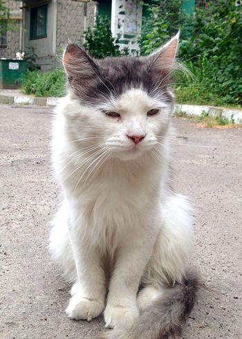 Cat♡ Homeless Cats Cat Cats