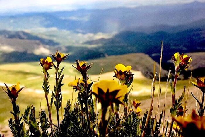 ~Seek the beauty within yourself~ Nature Plant Field Yellow Cloud - Sky Day No People Fragility Sky Beauty In Nature Outdoors Tranquility Petal Freshness Landscape Mountain Flower Head Scenics