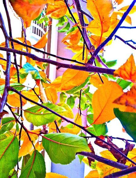 Autunn Autunno  Colors Of Autumn Autunm Coloriautunnaliautun