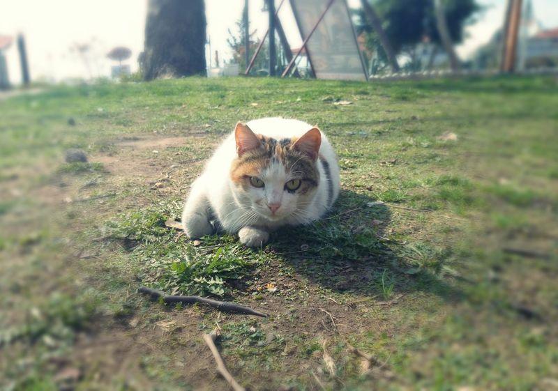 Kedi Aşkı Cutepets Catcatcat Kedi