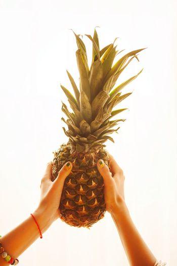 Holding Person White Background Leisure Activity Studio Shot Freshness Pineapple Fruit Fresh Sunny Rays Hands Bracelet