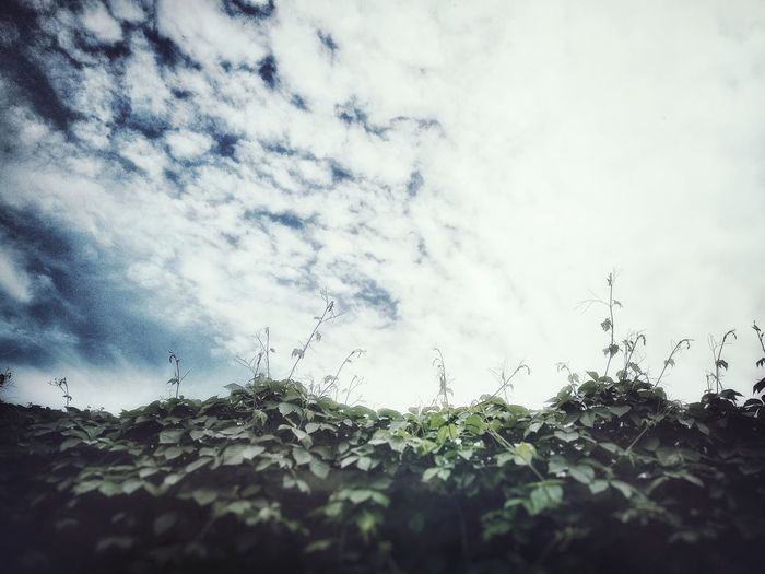 Clean sky and cloud Nature Neiborhood Wall Tree Art Lifestyles Clean Spring Nice Day Shot 中國畫 Tree Sky Close-up Cloud - Sky Plant