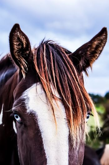 Horse One Animal Animal Head  Mane Outdoors Brown Close-up