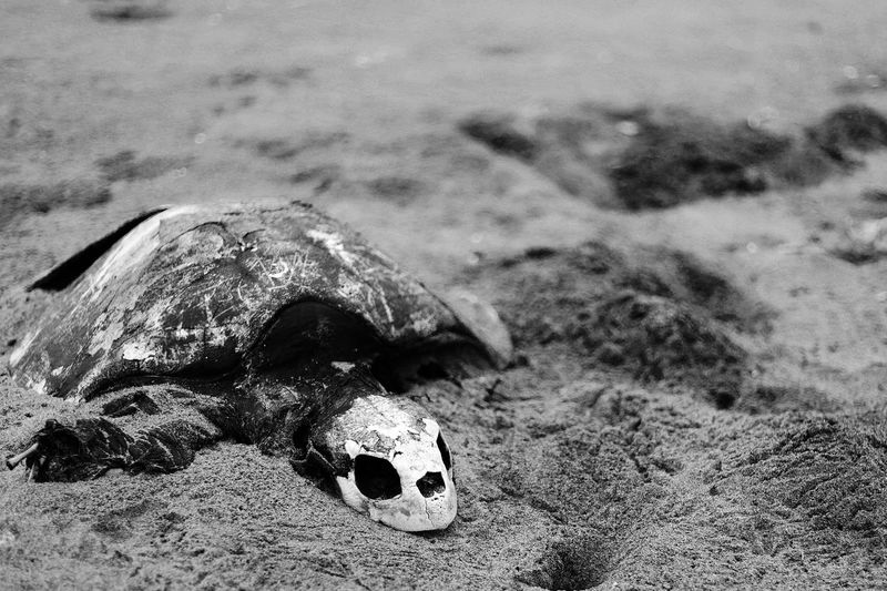 End of life with beginning Life Life Is A Beach Dead Life With Nature Sand & Sea Turtle EyeEm Best Shots EyeEm Gallery Eyem Collection Understanding Life Blackandwhite Contrast Emotional Learning What Is Life? LastDay Last Breath Say Something Hello World Fucture