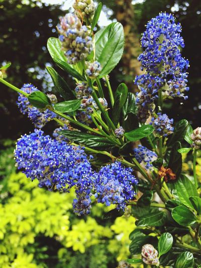 Flowering Plant Plant Flower Beauty In Nature Growth Purple Freshness