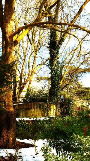 Tree Park Puit
