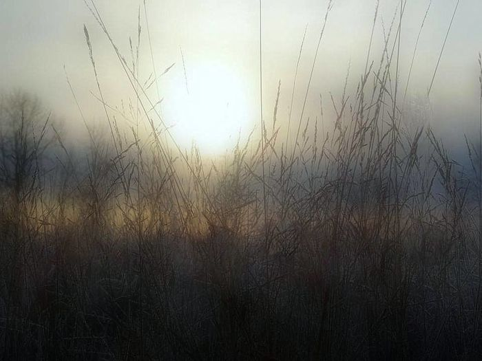 Atmosphere Atmospheric Mood Backgrounds Day Dry Field Full Frame Grass Grassy Growing Growth Magnuson Park Majestic Meadow Mystery Nature No People Outdoors Plant Uncultivated Weather