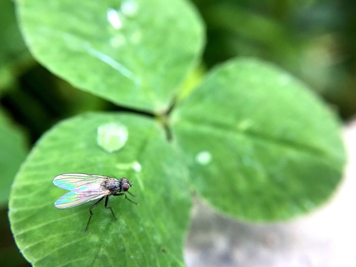 Insect macro Insect Animal Themes Green Color Leaf Nature Close-up One Animal Animals In The Wild No People Mobile Photography Extreme Close-up Growth Beauty In Nature Day Fragility Freshness Macro Photography Macro
