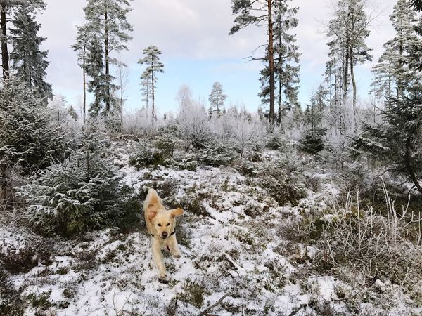 One Animal Winter Cold Temperature Nature Snow Dog Pets No People Day Beauty In Nature Outdoors Norway Spydeberg