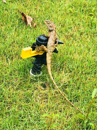 Grass Plant Animal Themes Nature High Angle View Animal No People Sunlight Animals In The Wild Green Color Animal Wildlife Vertebrate Reptile Land Outdoors Lizard One Animal Yellow Field Day