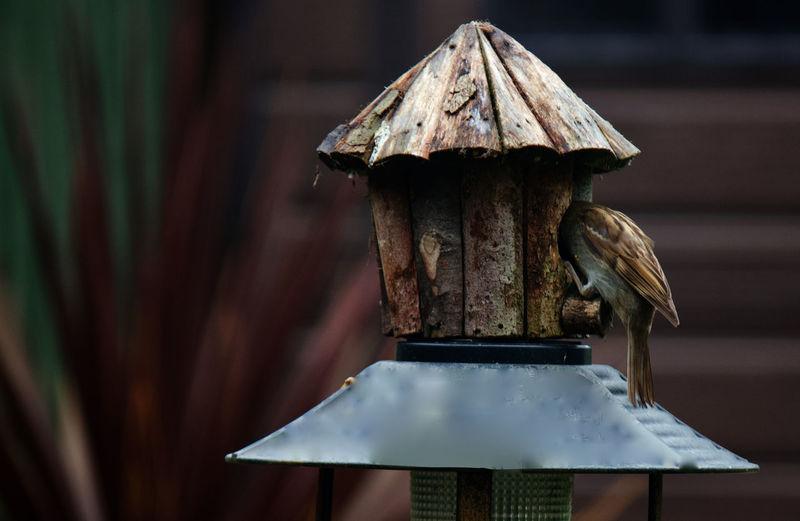 Close-up of birdhouse on nest
