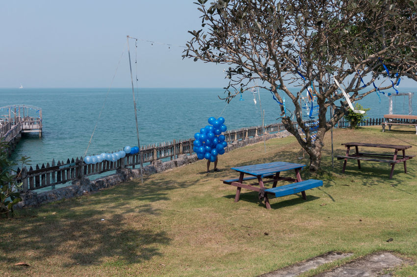 Balloons Beauty In Nature Blue Nature Outdoors Sea Sony Sony RX100 IV Street Photography Streetphotography Tree Water EyeEmNewHere The Street Photographer - 2017 EyeEm Awards