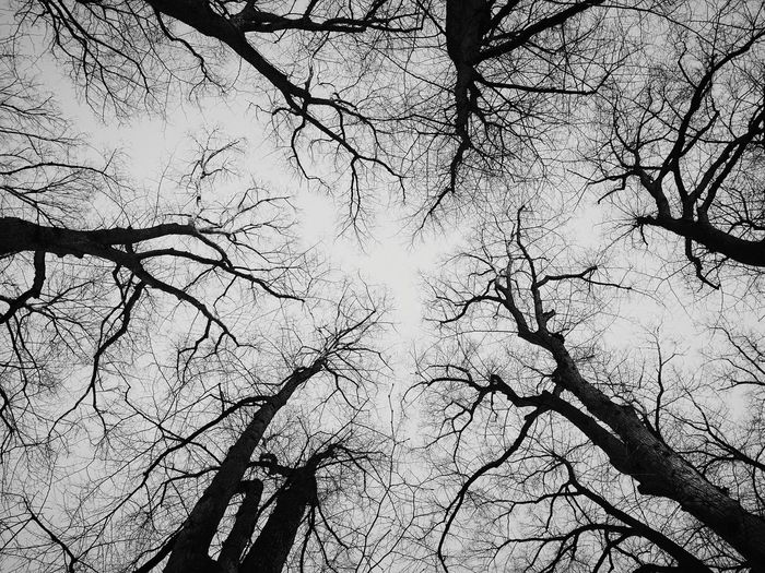 Blackandwhite Black And White Black & White Blackandwhite Photography Black&white Outdoor Photography Low Angle View Branch Outdoors Tree Beauty In Nature Sky