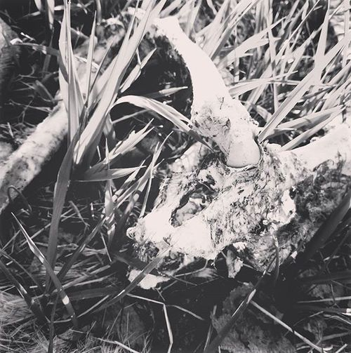 Take a picture of a bone or a skull and put a black and white filter on it... Automatically now a @beingasanocean edit... 😂 Beingasanocean Baao Metal Melodic Hardcore Music Bones Blackandwhite JoelQuartuccio