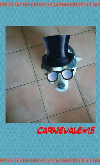 Carnevale Carnevale2015 Carnevale ❤ Dog Love Dog Dog❤ Doglover Dogslife FUNNY ANIMALS